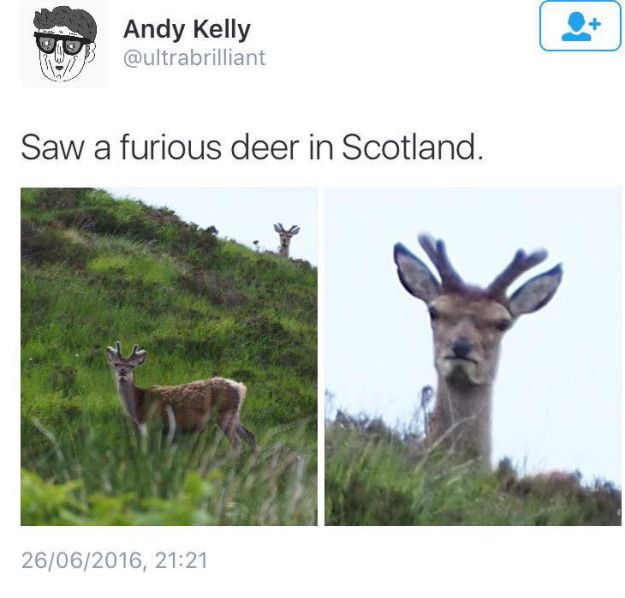 And this truly amazing photo. | 27 Scottish Pictures That Will Make You Laugh For Once In Your Life