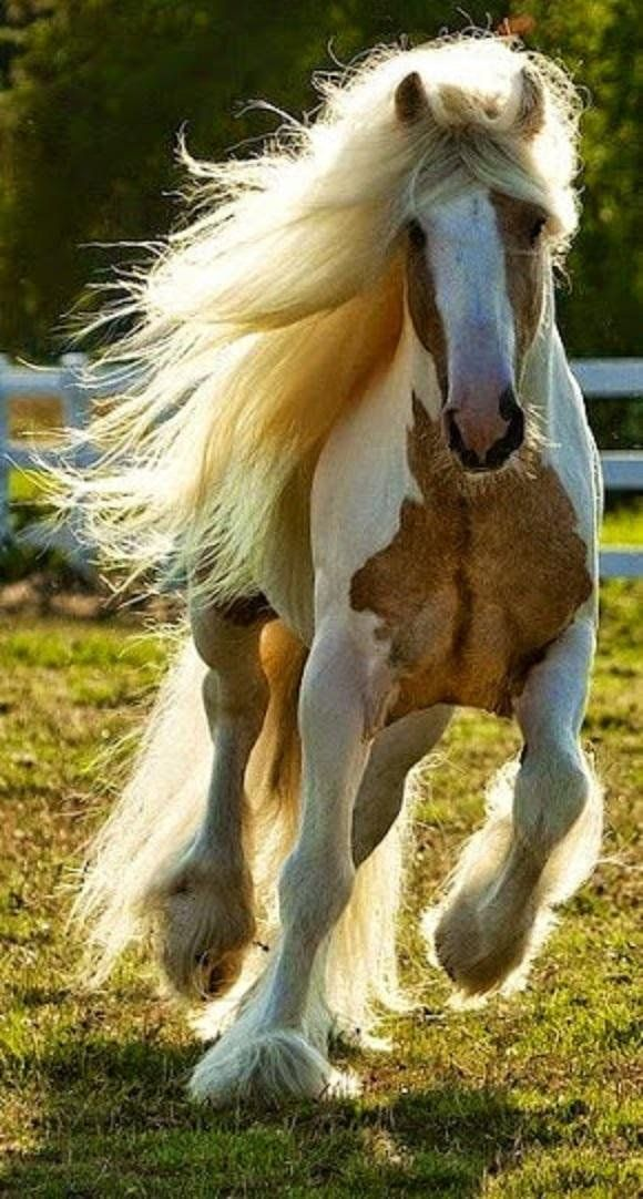 Beatiful Houses Alluring 618 Best Horses Images On Pinterest  Horses Animals And Inspiration