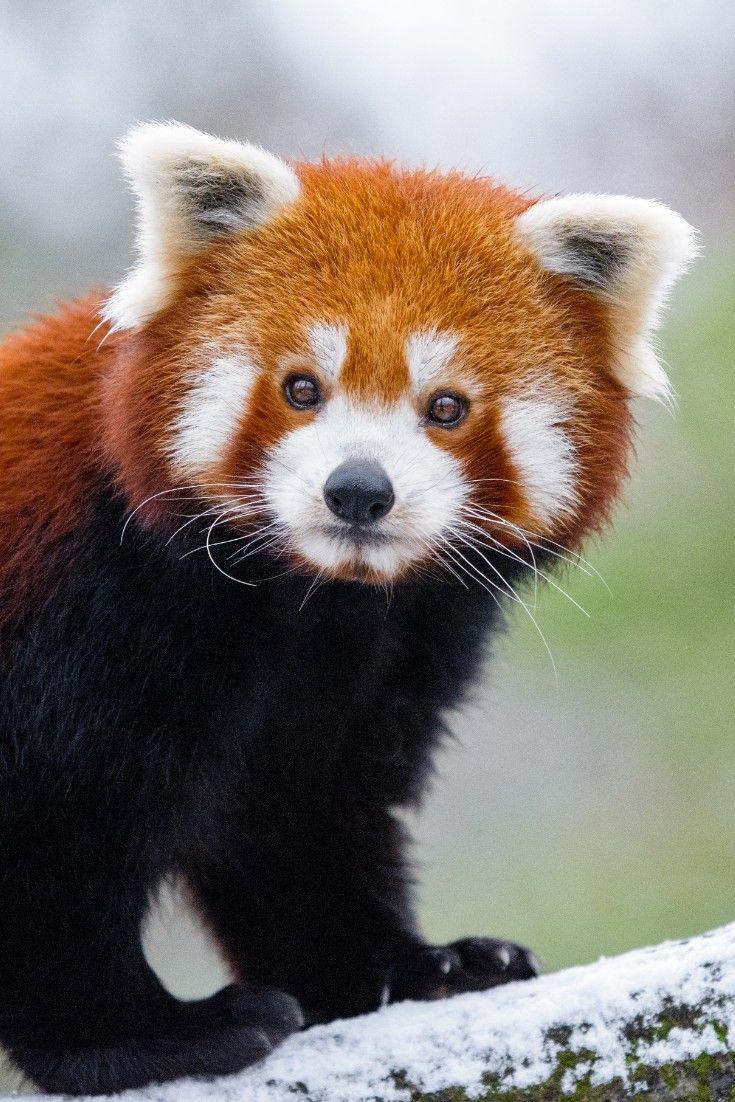Top 20 Cutest Dog Breeds Around The World Cute Animals Animals