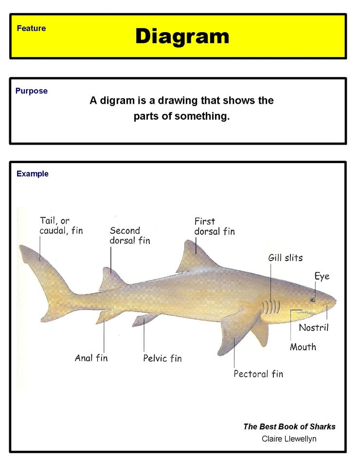17 Best images about 2nd grade ELA CCSS-Reading Informational Text ...