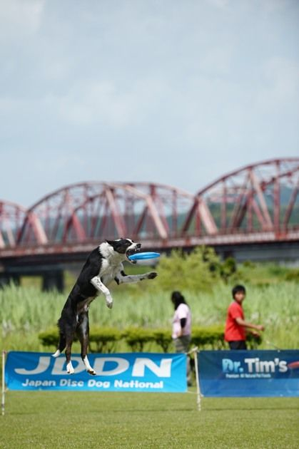 teach your dog how to catch a frisbee in air