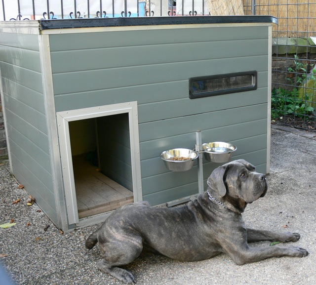 Dog Kennels In Hoton