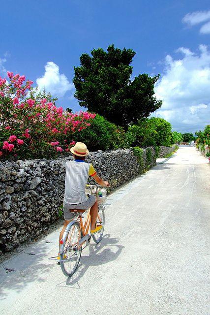 Taketomi Island 8 1 Newer Older 自転車で走っていたら、 石垣の内側に花と緑葉が続く。