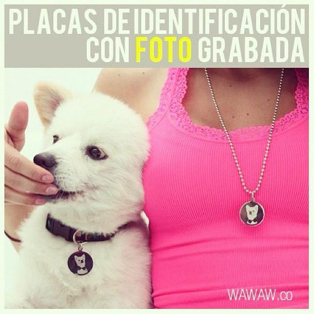 Placas de identificación grabadas, por ambas caras, con la foto de tu mascota. Info: wawaw.co