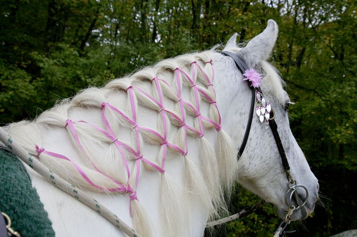 How will you style your horse's hair for Ride for the Cure? October 6, 2013.