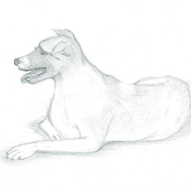 #drawing #drawanimal #dogdrawing