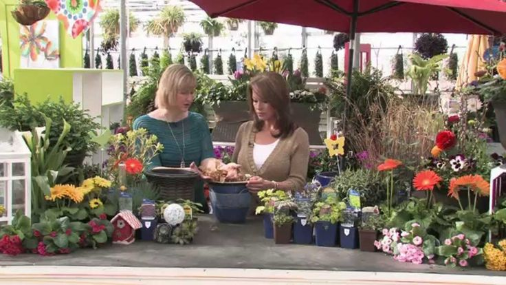 On today's show Colleen shows us some great techniques and inspires us in container gardening. Then we head into Burlington to Serendipity Tea House where we learn a little about high tea etiquette. Back in our kitchen Chef Mark Farrugia from La Piazza Allegra Restaurant prepares a must try appetizer - Polenta Napoleon! #PolentaRecipe #HighTea