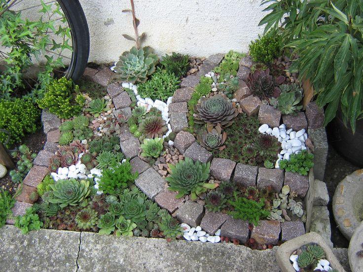 Steingarten mit dachwurzen steingarten pinterest for Kleinen vorgarten pflegeleicht gestalten