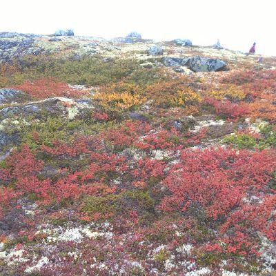 The UnPerfeckt Me: Hardangervidda
