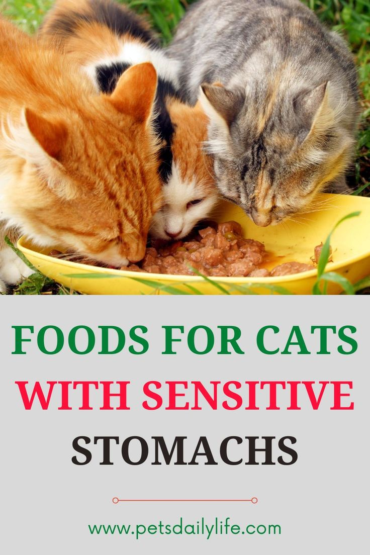 7 best foods for cats with sensitive stomachs pets daily