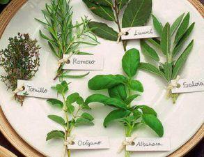 Nombres de las plantas medicinales y su uso