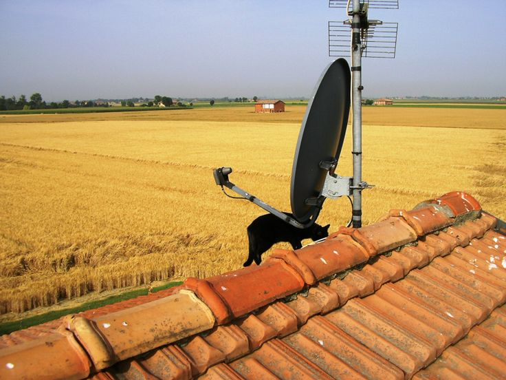 Lanera ama le altezze... eccola sul tetto della nostra casa