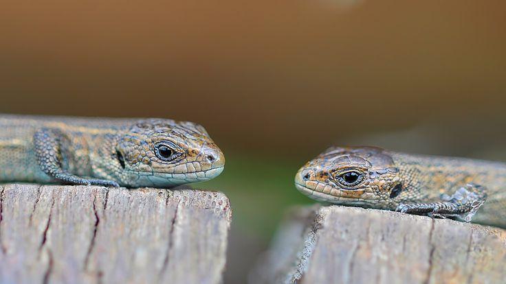 Amphibien und Reptilien