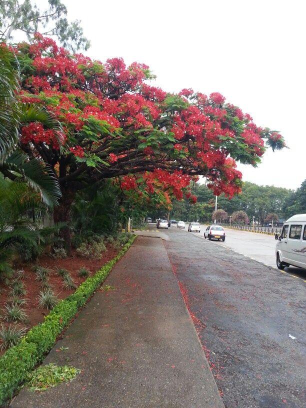 Early monsoon bloom