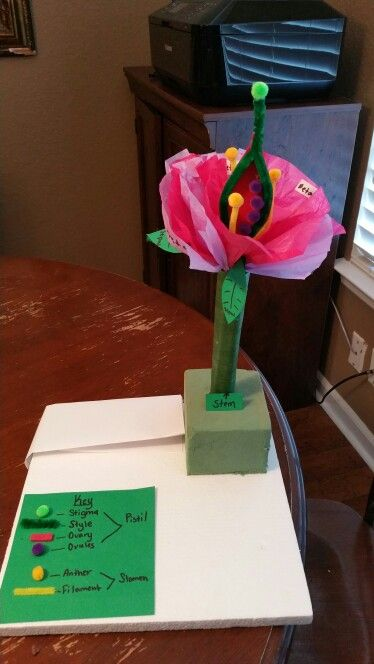 3d flower model | flower science project | Pinterest | Plant science, Science and Science Projects
