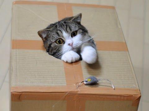 kucing dalam kardus, rumah kucing kardus, kandang kucing kardus, kardus kucing, membuat rumah kucing kardus