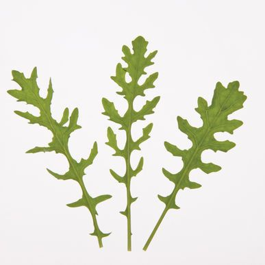 Surrey Green Seeds (Eruca sativa) + FREE Bonus 6 Variety Seed Pack - a $30 Value!