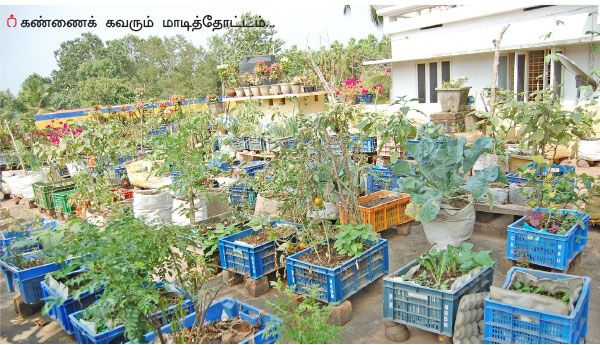 "Home gardeners experience - Pasumai Vikatan | ""வீட்டுத்தோட்டம் அமையுங்கள் இப்படி!"" | பசுமை விகடன் - 2016-05-25"