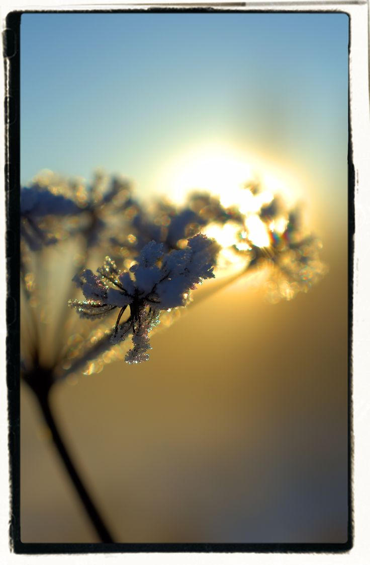 Frost and sun... 27th January 2017 Finland