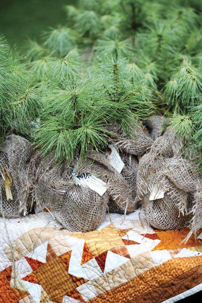 Pine Tree Favors