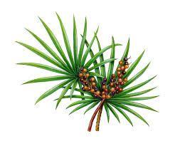 7 Magical Herbs for Hair Loss - http://bioroyale.com/magical-herbs-for-hair-loss #herbal #hair #Singapore