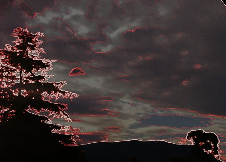 Pine tree in technicolour