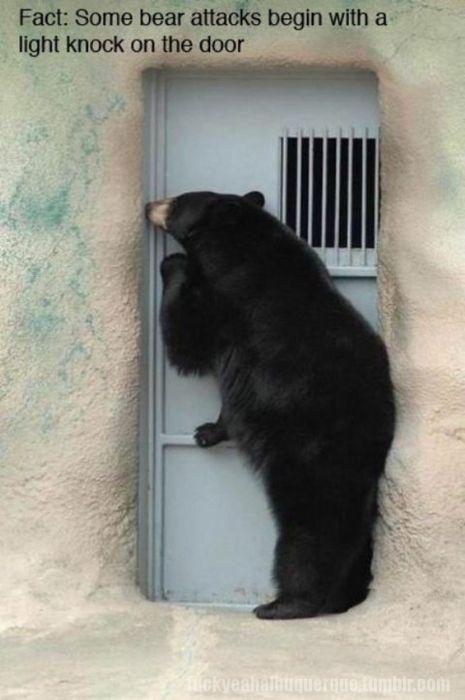 BEAR The Doors, Politics Bears, Funny Animal Pictures, Funny Stuff, Guys Tattoo, Knock Knock, Animal Funny, Random Facts, Funny Memes