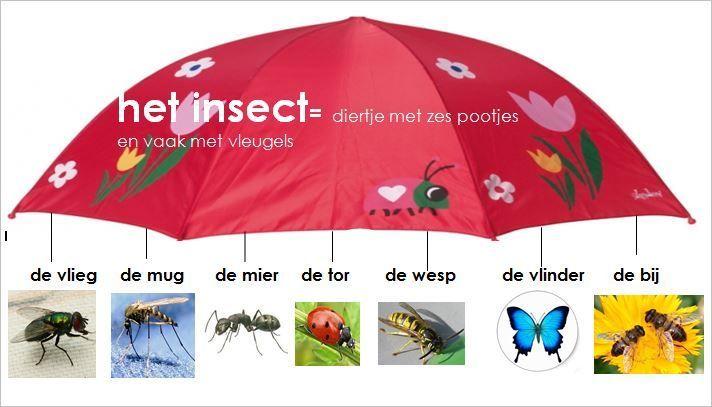 * Het insect!