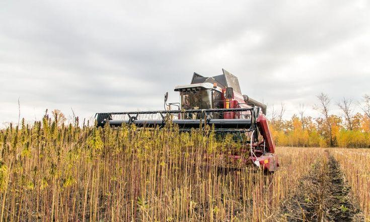 Indiana Has Finally Legalized Industrial Hemp