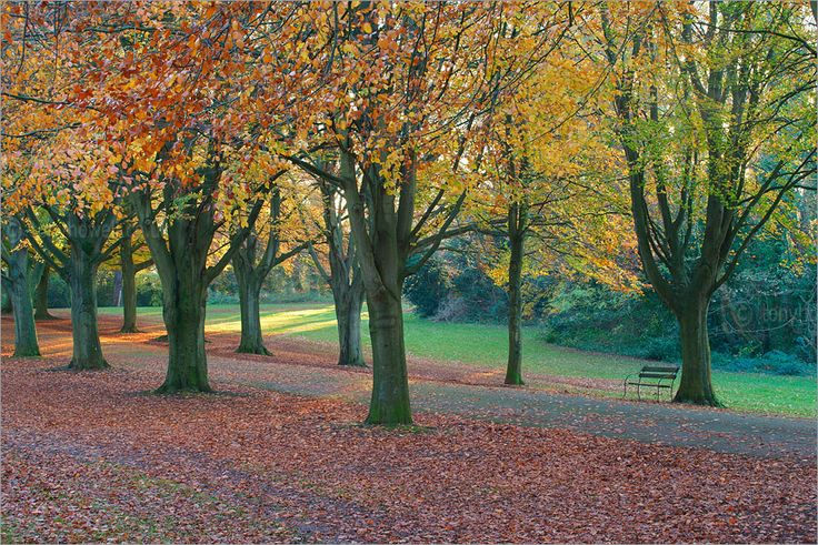 Autumn leaves. The Downs, Clifton, Bristol. http://www.tonyhowell.co.uk/new/bristolphotos.htm