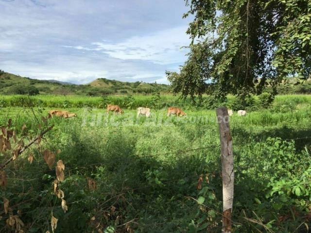 Finca en Venta - Pitalito paraiso acacos