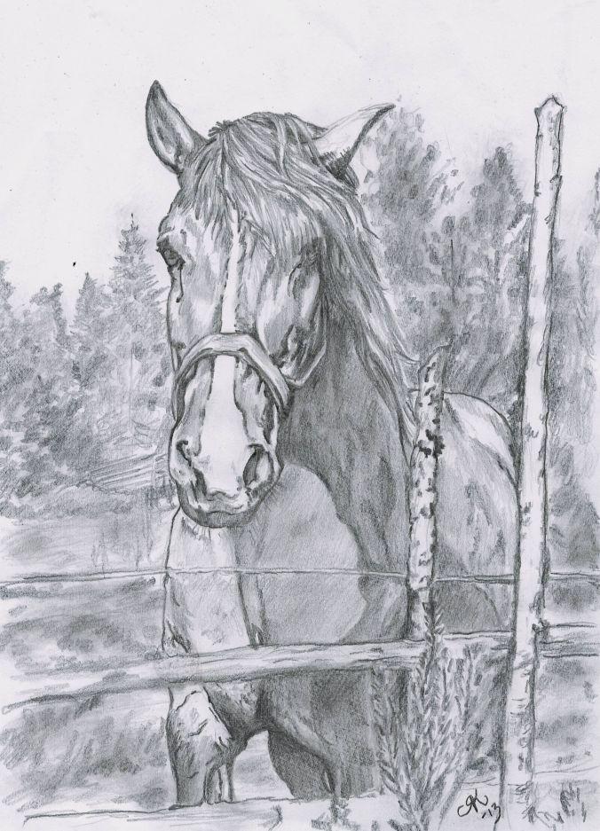 Horse by kiti83