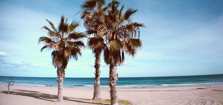 Palm trees and beaches are awesome ! by David Nilsson