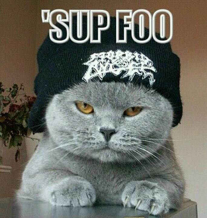 Hop hip Funny cat images, Silly cats pictures, Funny dog