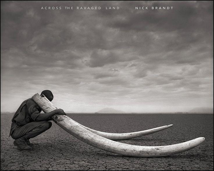 Lake Natron animals   ... : Photo's: Tanzania's Lake Natron calcifies the animals into statues