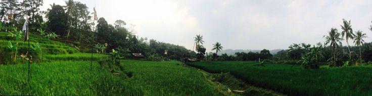 Rijstvelden, Bogor, Java