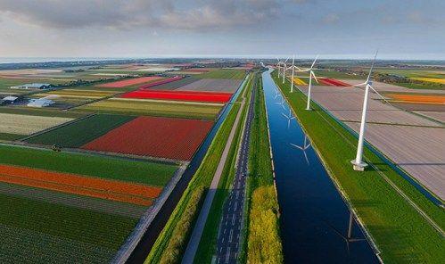 Lale bahçeleri, Hollanda
