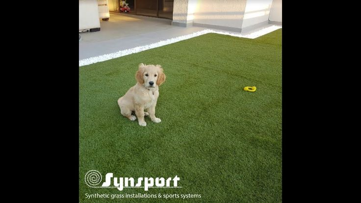 synsport .co.za Video by CREATIVEmarketing.media SWITCH TO AN ARTIFICIAL GRASS LAWN – SOFT, SAFE AND LOOKS JUST LIKE REAL GRASS! Visit our website www.synsport.co.za | www.syntheticlawn.co.za , call now on 021 987 1441 or e-mail us at info@synsport.co.za for your free quote.  #syntheticlawn #savewater #synsport #landscaping #syntheticgrass #southafrica #capetown #guaranteed #sportsurface #durability #knysna  @ Synsport