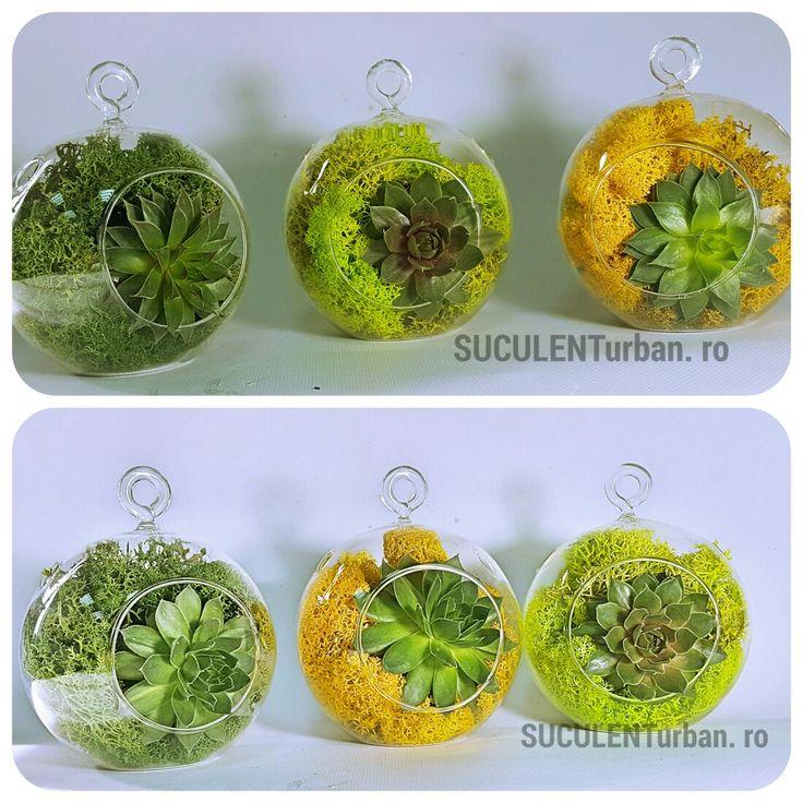 Mini terariu cu plante suculente în vas tip bol suspendat