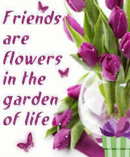 Beautiful Madam In Beautiful Garden Quotes: 47 Best Haters Images On Pinterest