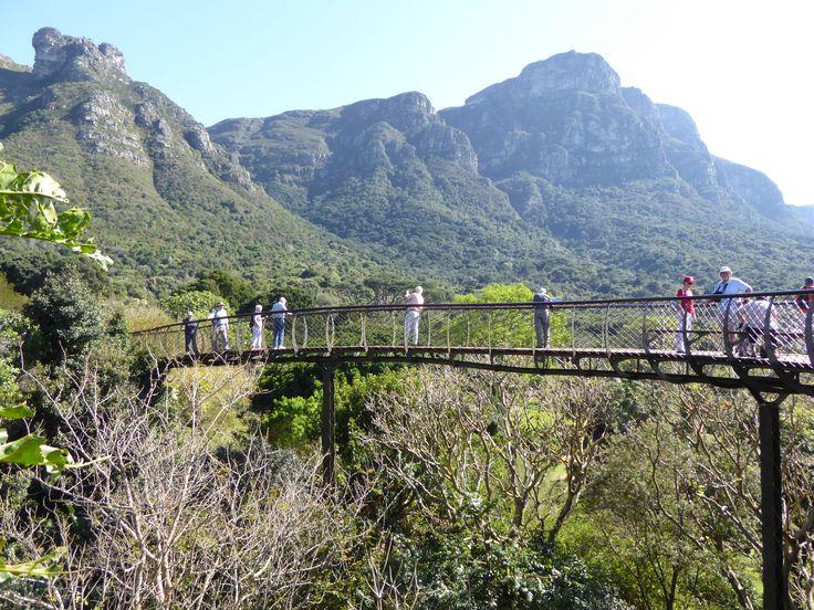 Enjoy the tree top walk in the Kirstenbosch Botanical Gardens