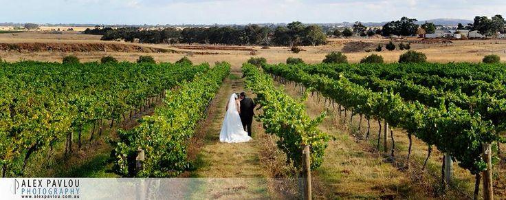 Witchmount Winery Wedding Melbourne - photo by : Con Tsioukis of Alex Pavlou Photography - www.alexpavlou.com
