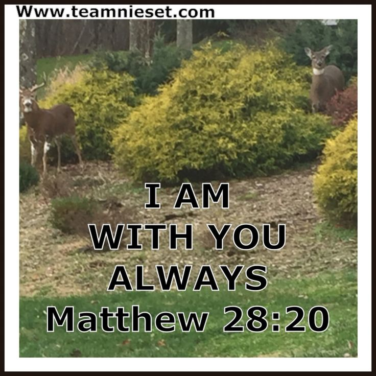 I am always with you Faith quotes from TEAM Nieset
