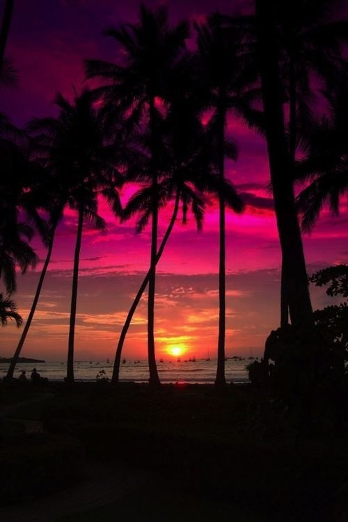 Tropical sunsets are our favorite #tropicalescape #vacationland