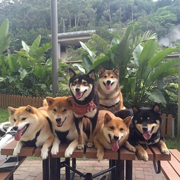 """Posing for a group photo can be a challenge, but it's always worth it."" 