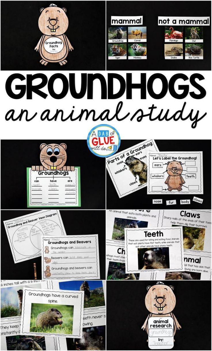 Engage your class in an exciting hands-on experience learning all about groundhogs! This Groundhog: An Animal Study is perfect for science in Preschool, Pre-K, Kindergarten, First Grade, and Second Grade classrooms and packed full of inviting science activities.  Students will learn about the difference between groundhogs and beavers, mammals, parts of a groundhog, and a groundhog can, have, are craftivity. When students are done they can complete a groundhog research project. This pack is…