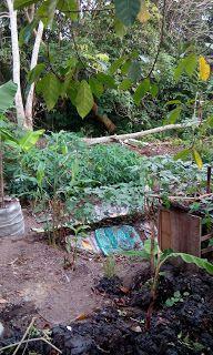 Belajar-Bertanam-tanaman: Kebun yang semak
