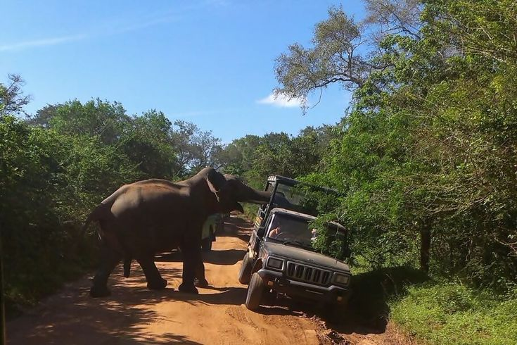 Come to National park they said, it will be fun they said. Why are you scared? Elephant is friendly animal and you are in a caged secure jeep.