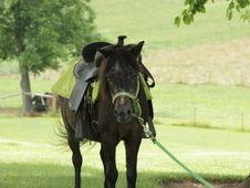 Very Sweet Beautiful Shetland Pony Cross Mare Shetland pony for sale in Sebree, Kentucky :: HorseClicks