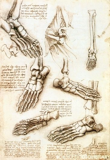 leonardo da vinci anatomy studies - Google Search